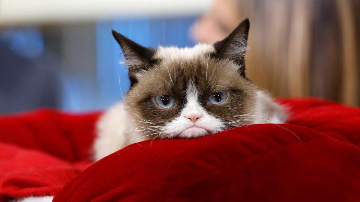 Grumpy Cat.[New York Times]