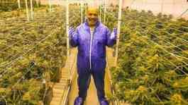 Mike Tyson di tengah kebun ganja Tyson Ranch di California. (Instagram Tyson Ranch)