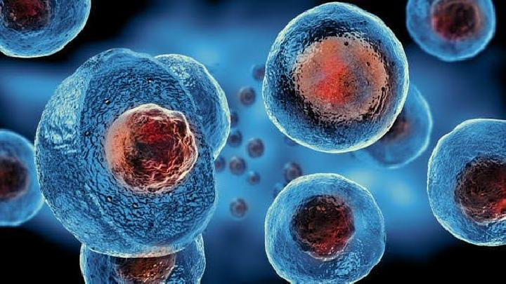 Stem Cell. theconversation.com